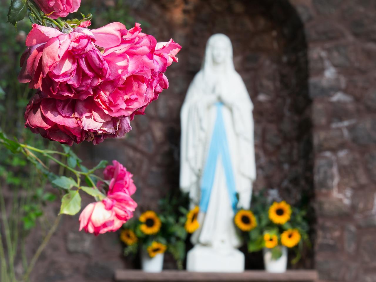 maria verwelkte rozen